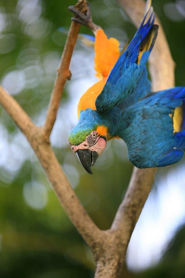 Papegaai op een tak royalty-vrije stock fotografie