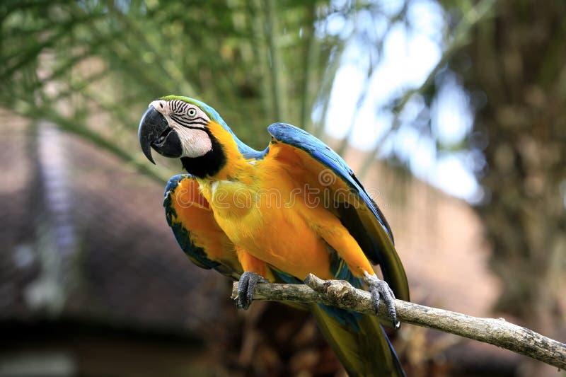 Papegaai op een tak stock foto's