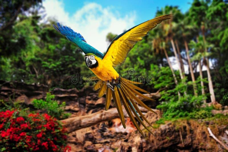 Papegaai in tropisch landschap stock fotografie
