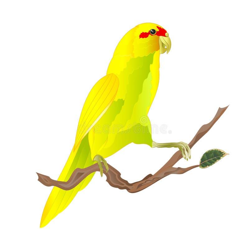 Papegaai van vogel de Indische Ringneck in Geel op takwaterverf op een witte uitstekende vector editable illustratie als achtergr royalty-vrije illustratie