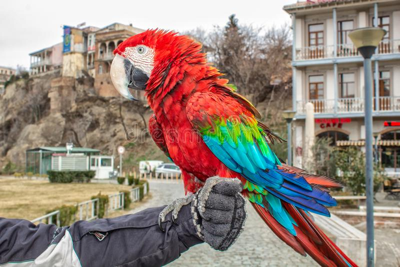 Papegaaiaronskelken in de stad van Tbilisi royalty-vrije stock afbeeldingen