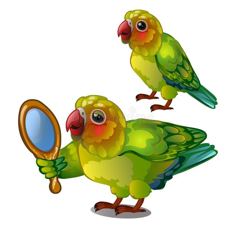 Papegaaidwergpapegaai die haar eigen gedachtengang in de spiegel bewonderen De tropische bedwongen vogel is geïsoleerd op een wit vector illustratie