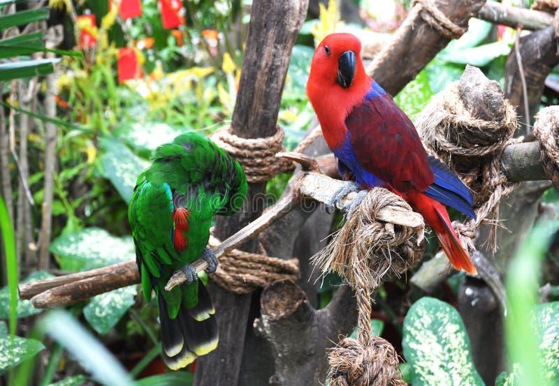 Download Papegaaien stock afbeelding. Afbeelding bestaande uit parakeet - 29505803
