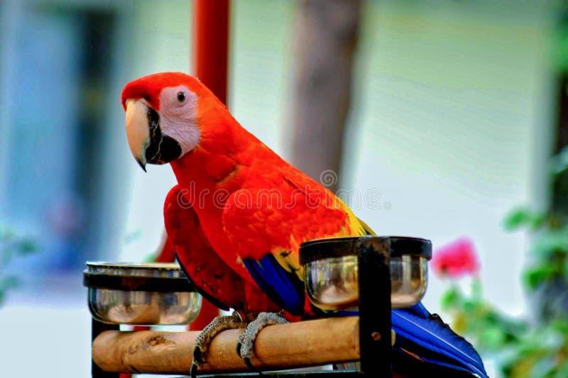 Papegaaienfoto stock afbeelding