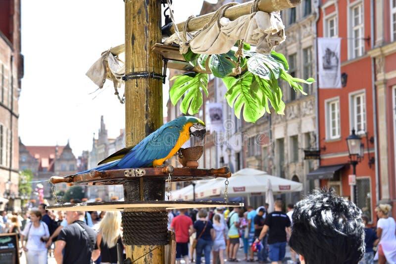 Papegaaiportret van de Blauwe en gele Ara stock afbeelding