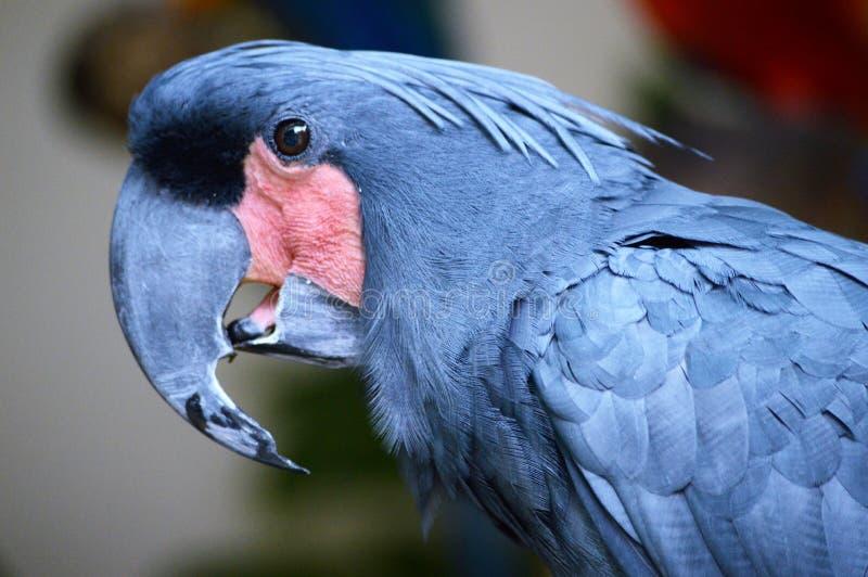 Papegaaiprofiel royalty-vrije stock foto's