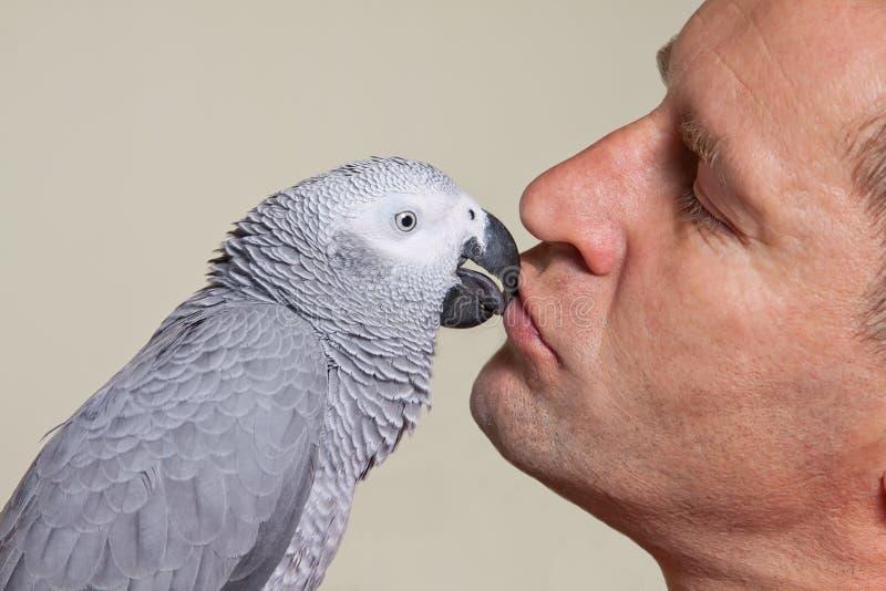 Papegoja för afrikanska grå färger som kysser en man arkivbilder