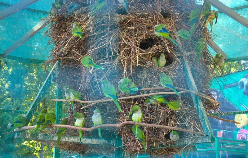 Papegoja i dess rede royaltyfria bilder