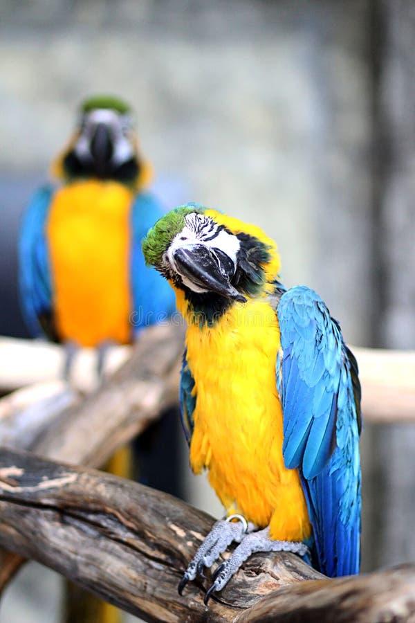 Papegoja i en zoo royaltyfria bilder