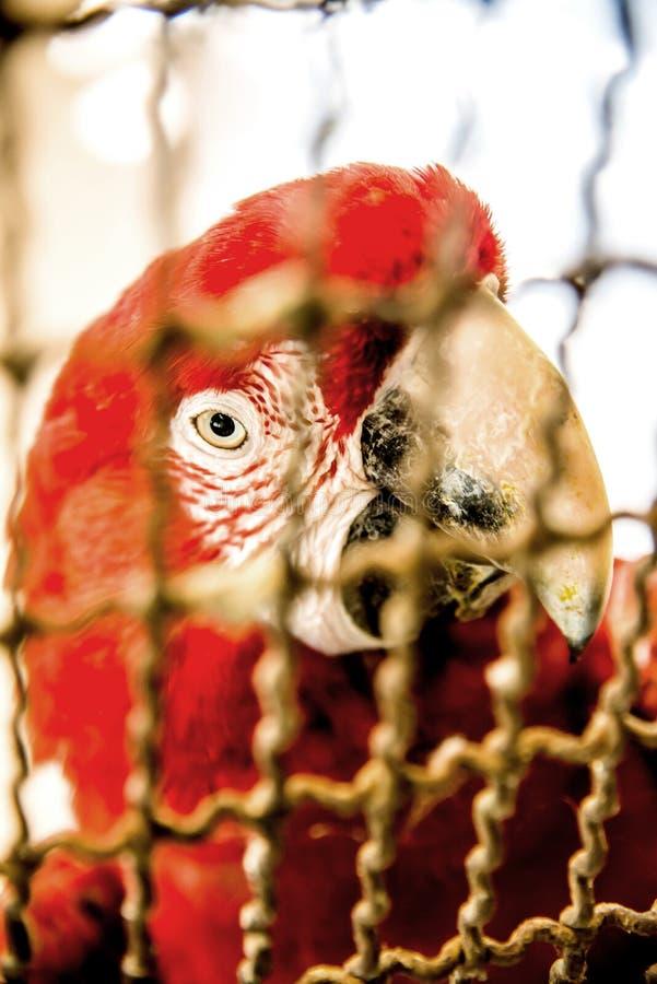 papegoja i fall att royaltyfri foto