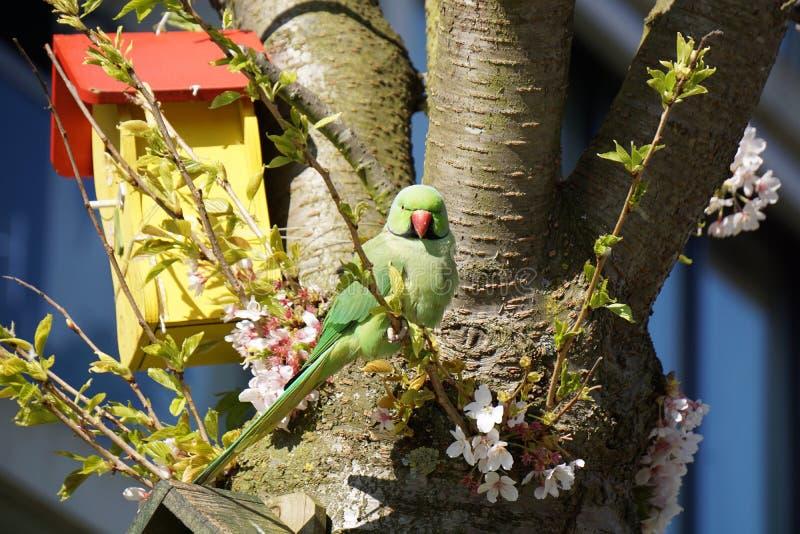 Papegoja i parkera arkivbild
