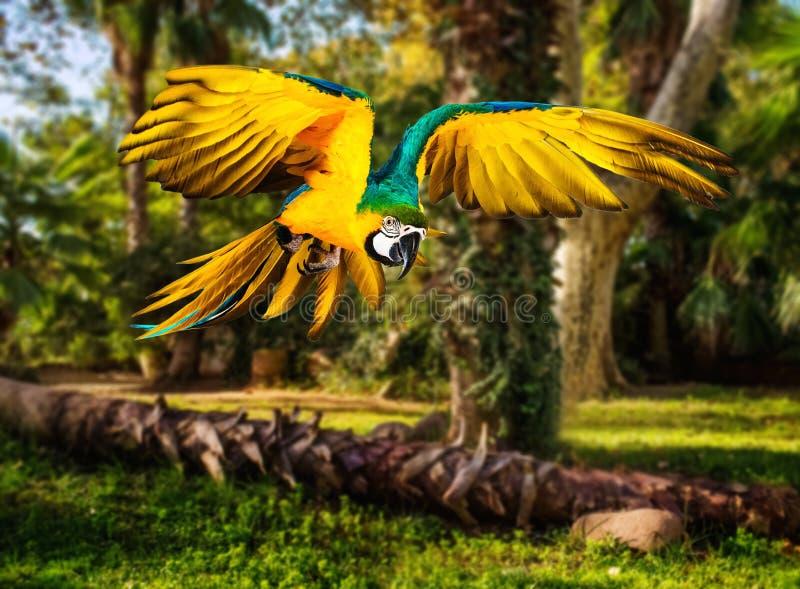 Papegoja i tropiskt landskap arkivfoton