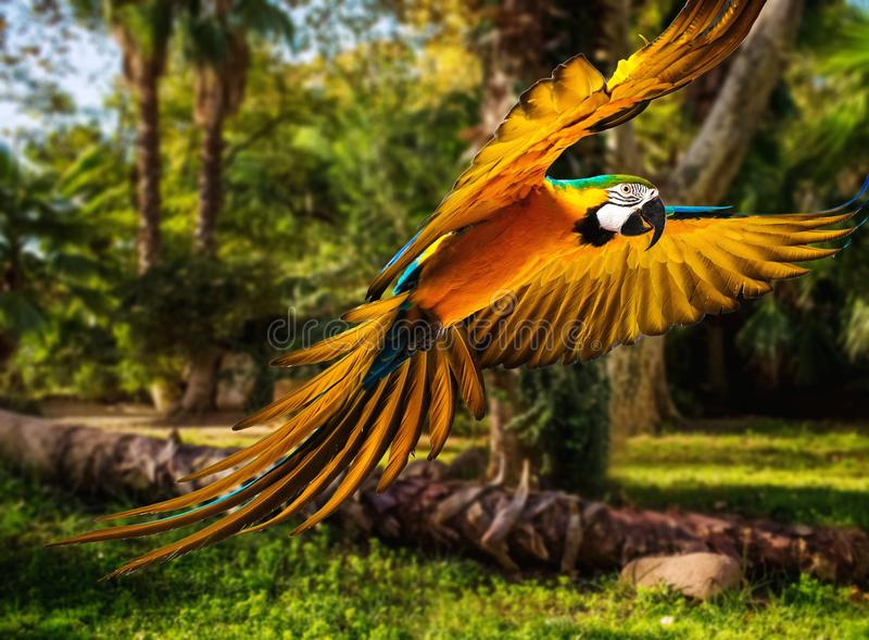 Papegoja i tropiskt landskap royaltyfria foton