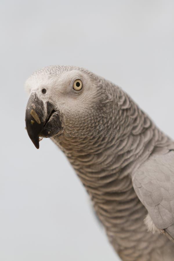 Papegoja på sittpinnen royaltyfria foton