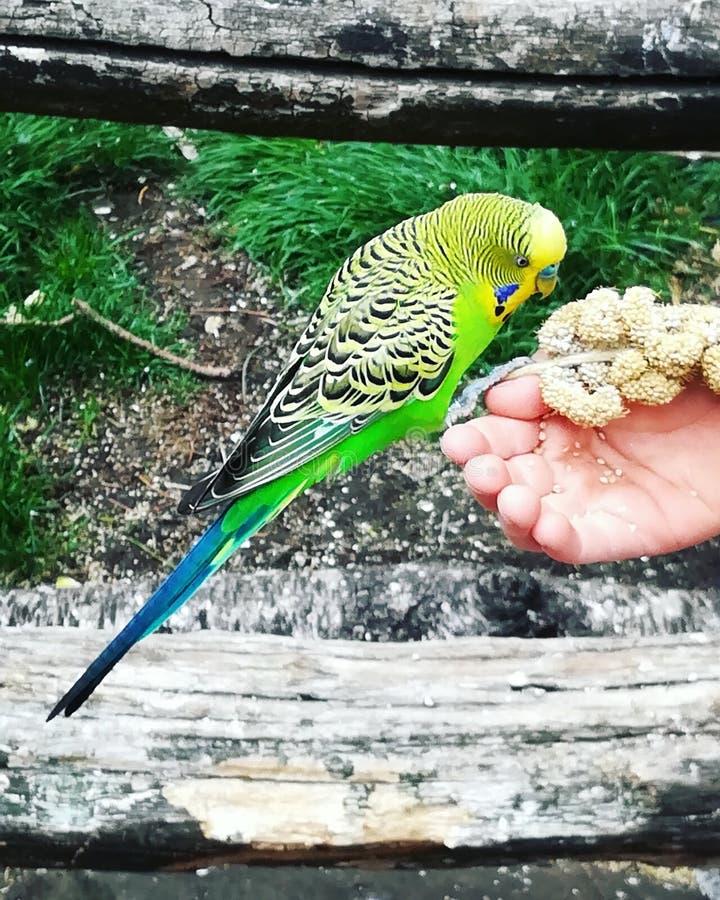 Papegoja som mycket är härlig royaltyfri fotografi