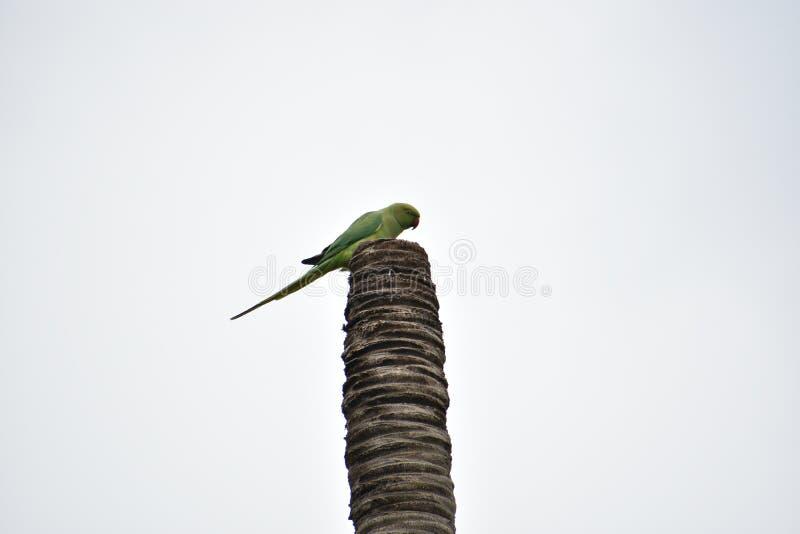 Papegoja, stam, trä och himmel royaltyfri fotografi