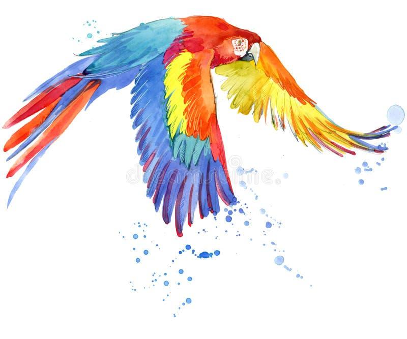papegoja Vattenfärgpapegojaillustration Tropisk fågelvattenfärg stock illustrationer