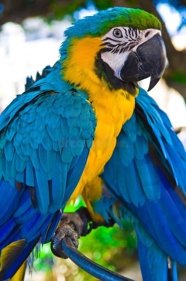 Papegojafågelsammanträde på sittpinnen royaltyfri foto