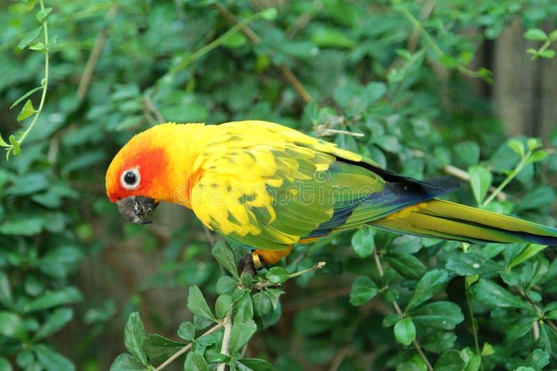 Papegojafåglar arkivbilder