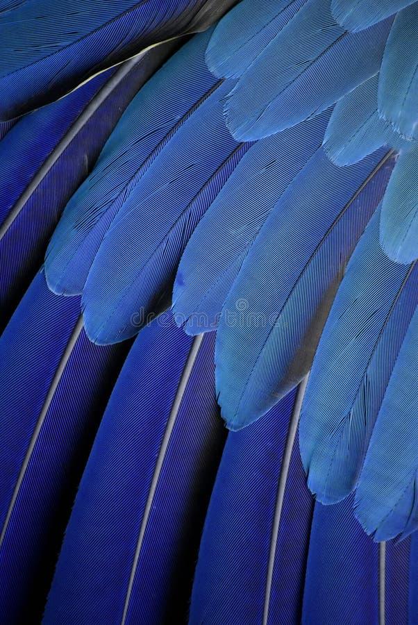 Papegojafjädrar royaltyfri foto