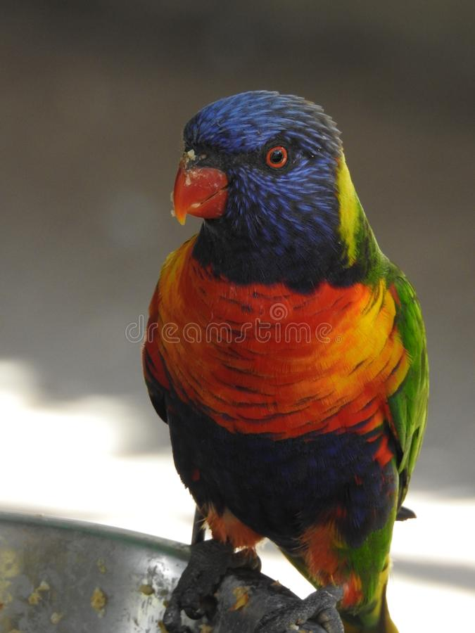 Papegojan på ett djurliv parkerar arkivbild