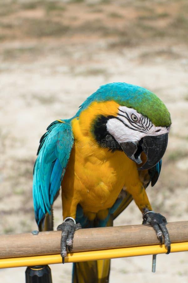 papegojor royaltyfria foton