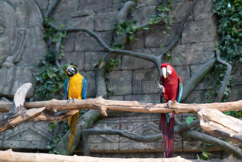 Papegojor på den minsk zoo royaltyfri foto