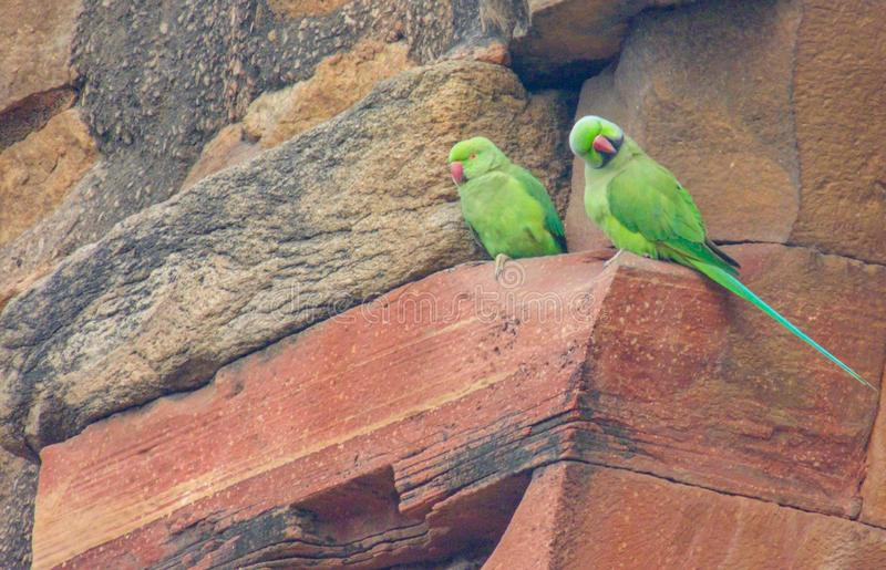 Papegojor på det Qutub Minar tornet i Delhi, Indien royaltyfria foton