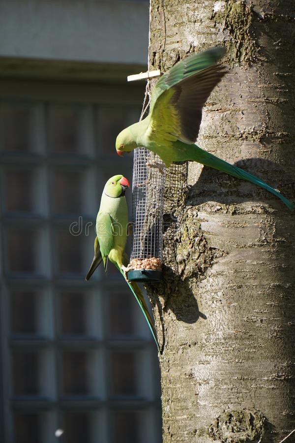 papegojor på trädet arkivfoto