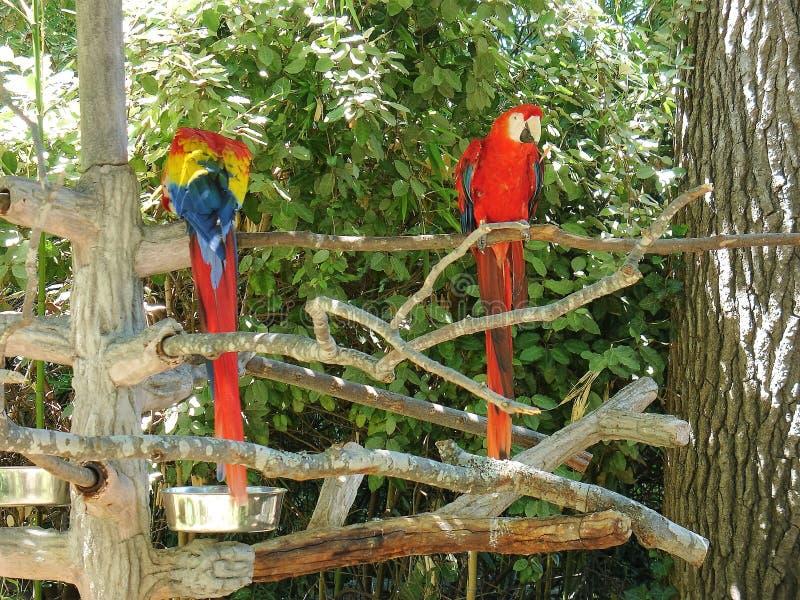 Papegojor på zoo arkivfoto