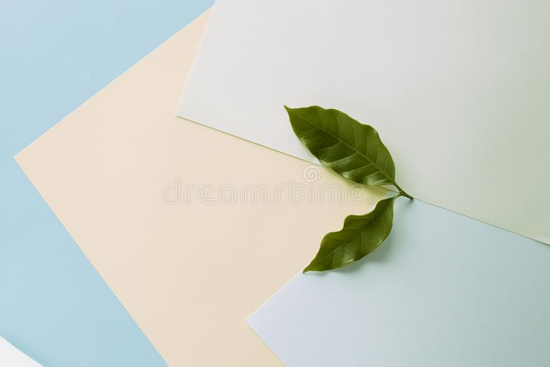 Papel azul, cor pastel amarela, verde da folha do café ilustração royalty free