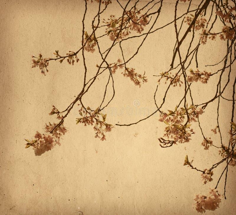 Papel da flor fotografia de stock royalty free
