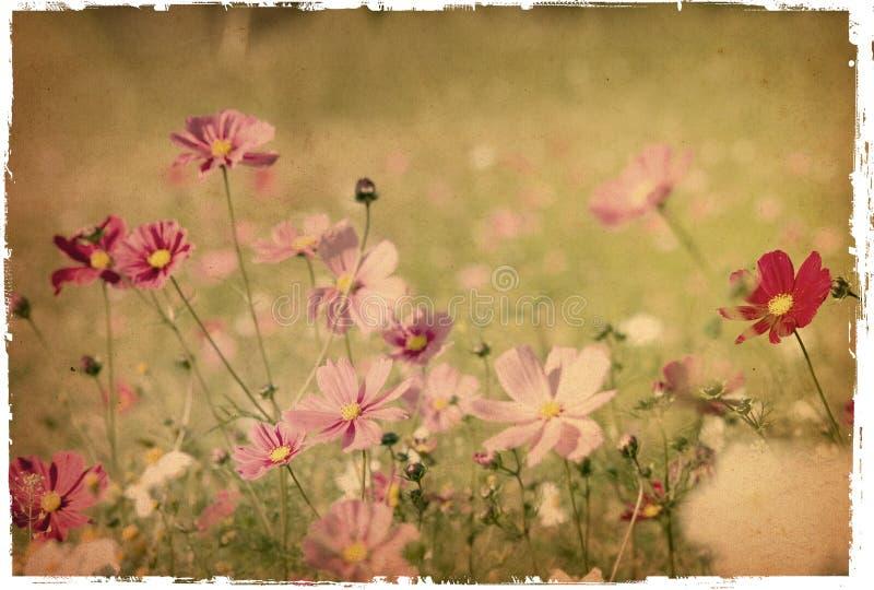 Papel da flor imagens de stock royalty free