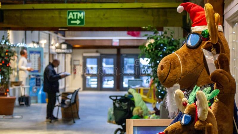 Papel da leitura do cliente na alameda durante a estação do Natal fotografia de stock