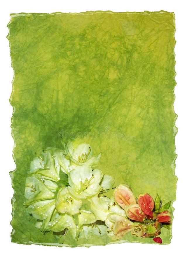 Papel de letra com azálea ilustração royalty free