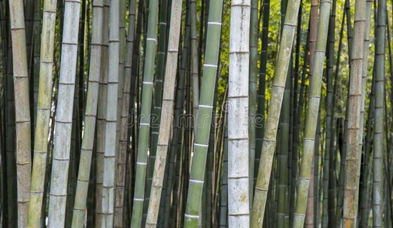 Papel de parede de bambu do fundo fotografia de stock
