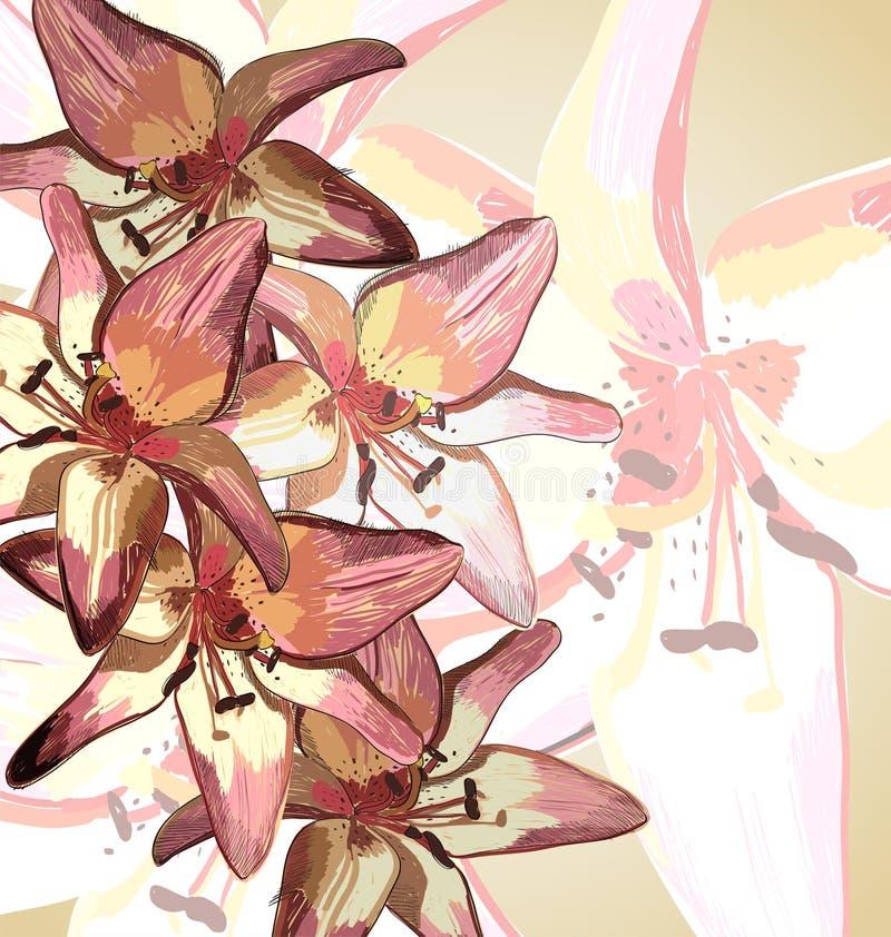 Download Lírios ilustração do vetor. Ilustração de botany, rosa - 29841061