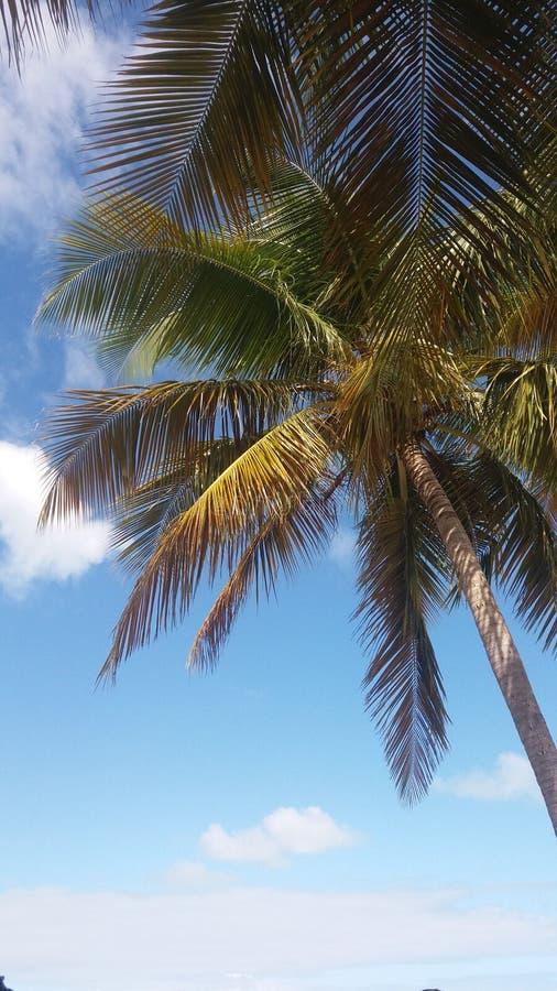 Papel de parede da palmeira fotografia de stock royalty free