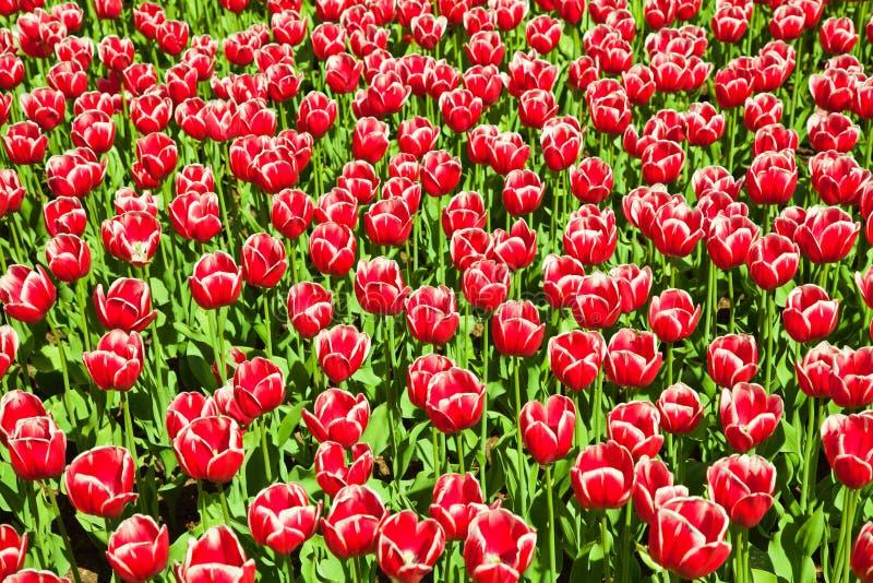 Papel de parede floral fotos de stock royalty free