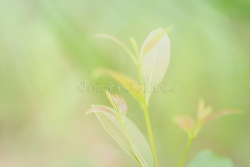 Papel de parede macio da natureza da mola de lâminas do verde do foco fotografia de stock royalty free