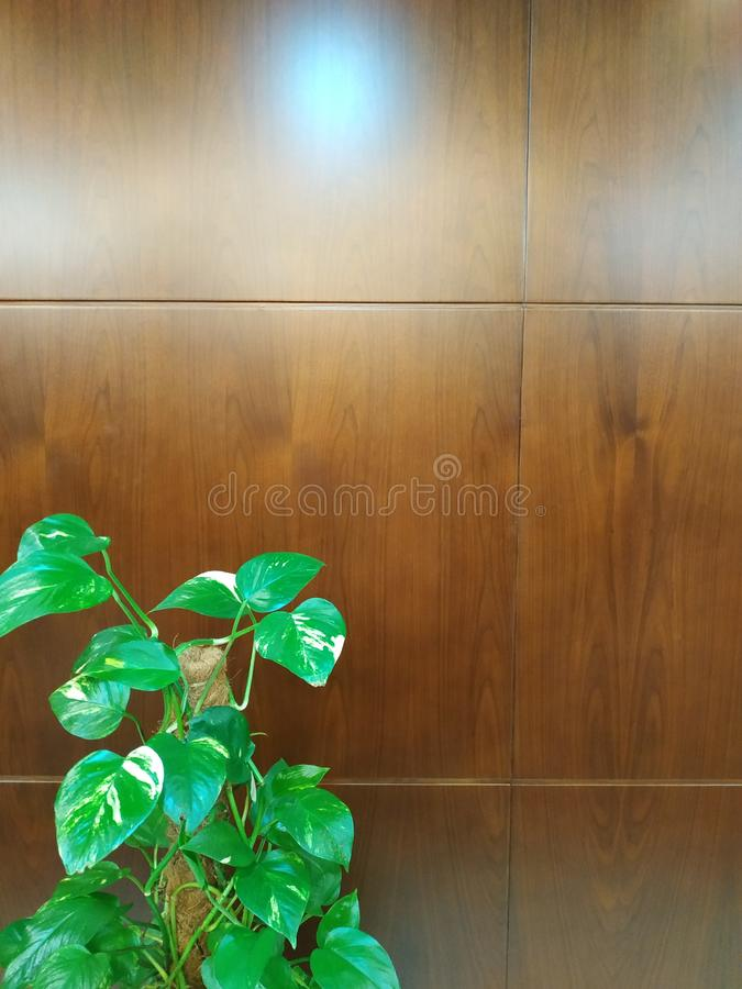 Papel de parede de madeira com planta fotografia de stock