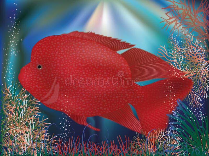 Papel de parede subaquático com os peixes tropicos vermelhos ilustração stock