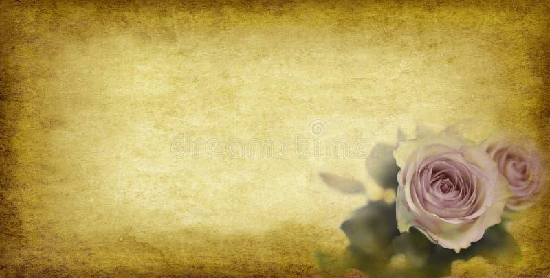 Papel e rosas velhos fotografia de stock