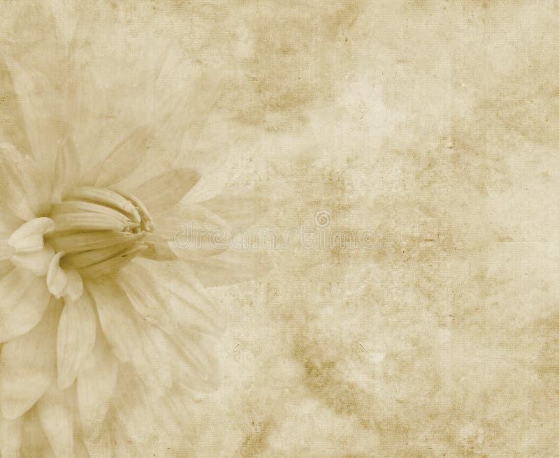 Papel floral ou pergaminho ilustração royalty free