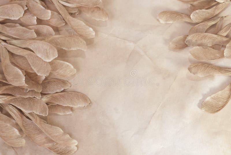 Papel hecho a mano con los gérmenes secos del otoño imagen de archivo