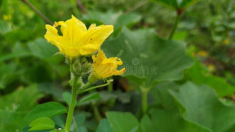 Papel pintado de la flor HD de plena pantalla fotos de archivo libres de regalías