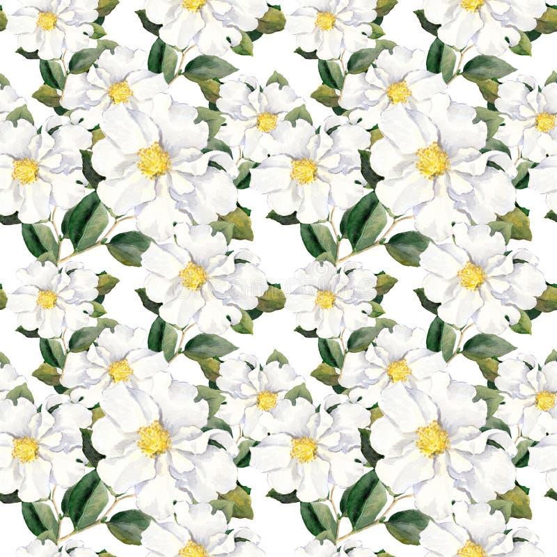 Papel pintado floral inconsútil con las flores blancas magnolia, peonías watercolour stock de ilustración