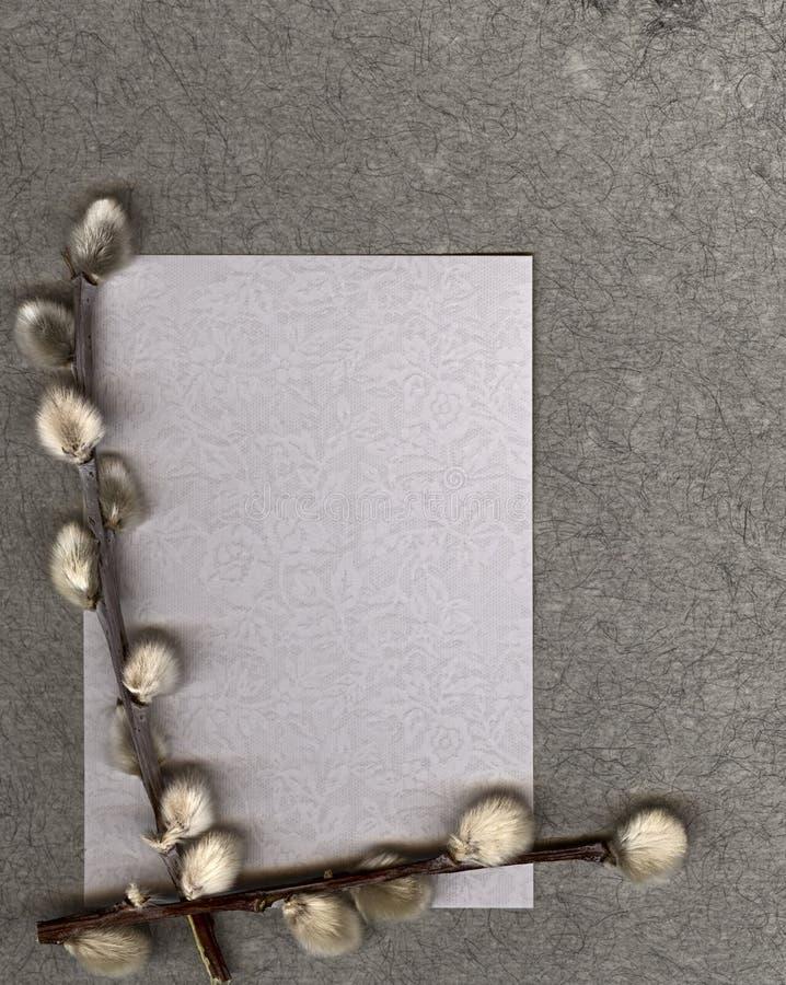 Papel Textured com bichano-salgueiro foto de stock royalty free