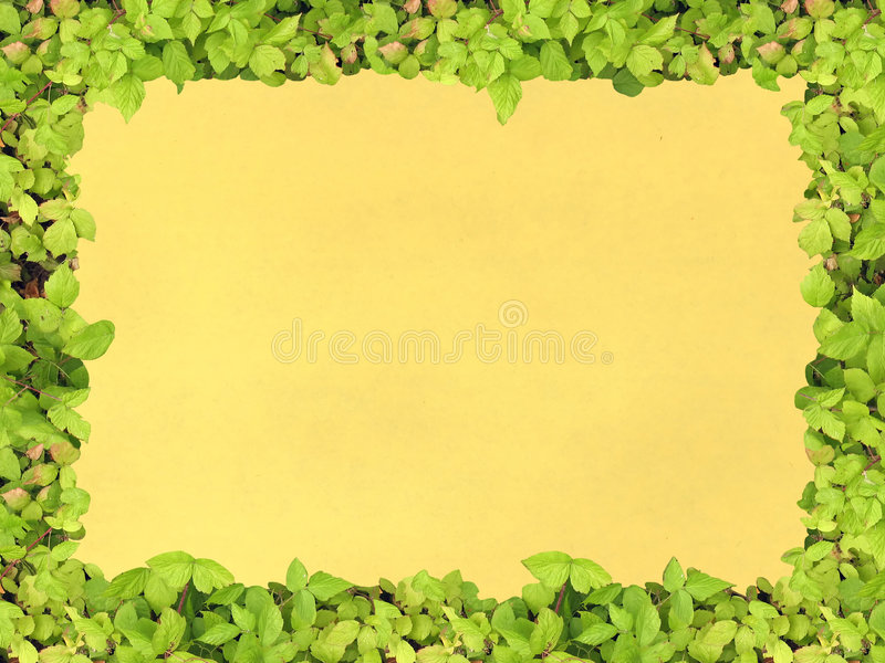 Papel verde del marco imagen de archivo libre de regalías