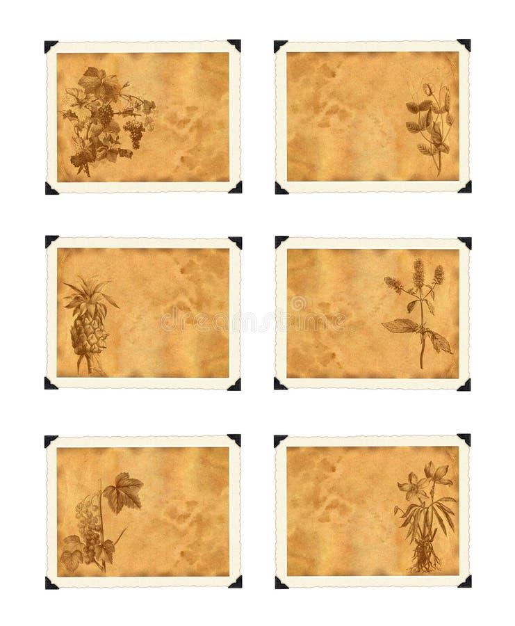 Papel viejo con las plantas en gráficos del estilo de la vendimia. stock de ilustración